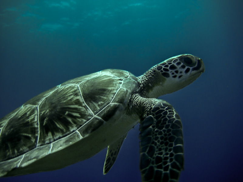 Travel Photo Roulette Green Turtle at Jake's Place - Enjoy The Journey