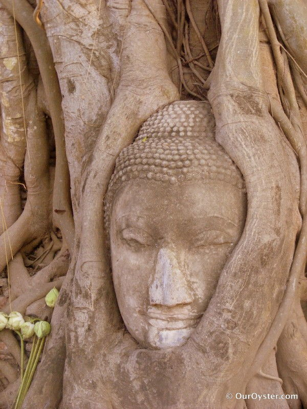 Travel Photo Roulette Tree Root Enveloping the Buddha - Our Oyster